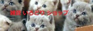 子猫 2.jpg